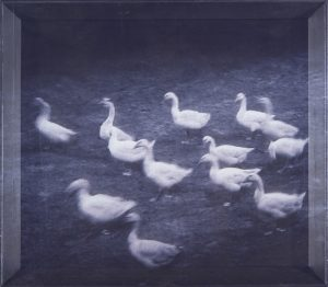 Lee_Yanor_Untitled_C_Print_and_print_on_voile_53x48cm